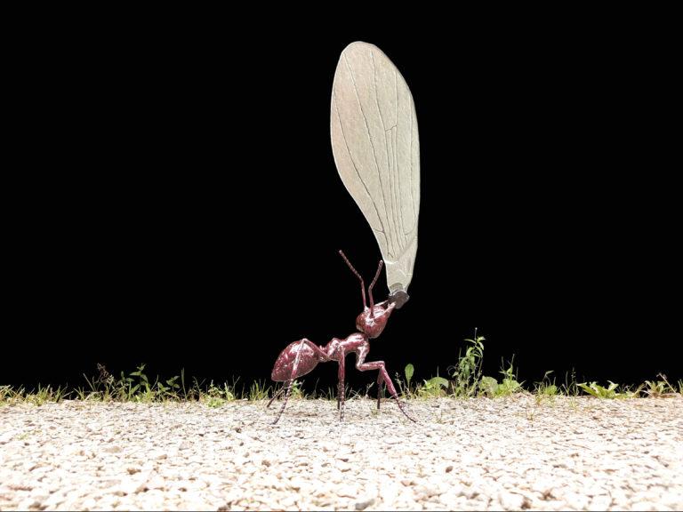 mrówka z metalu
